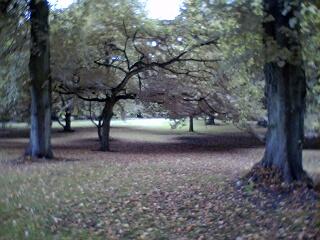 2004-09-25-Autumn.JPG