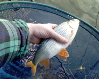 2006-03-26-Burley Lakes Roach-2