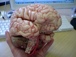 2006-05-19-Brain
