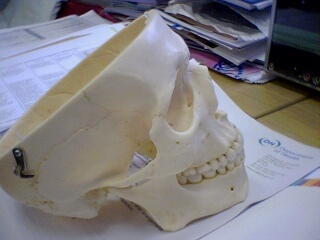 2006-05-19-Skull