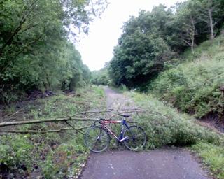 2006-06-21-Tree Down