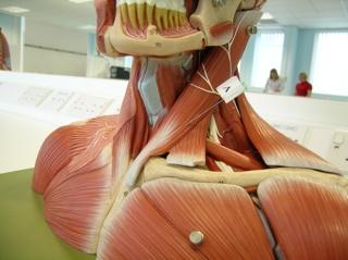 2007-07-09--Anatomy Q