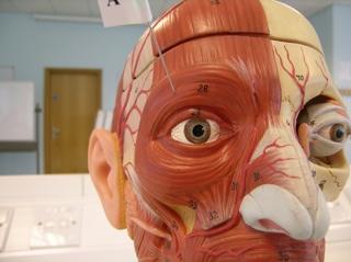 2007-07-09--Easy Anatomy Q