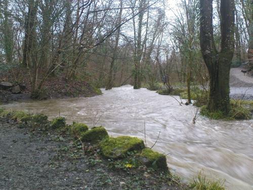 2008-01-15--Wet 3
