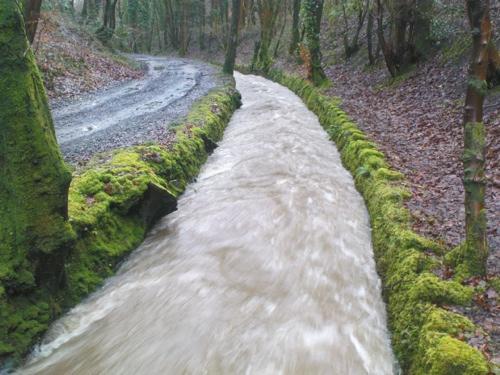 2008-01-15--Wet 4