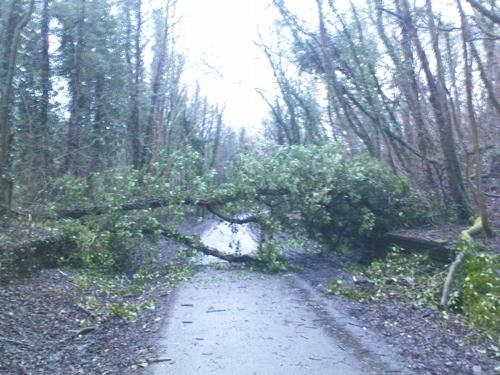 2009-01-19--Tree Down