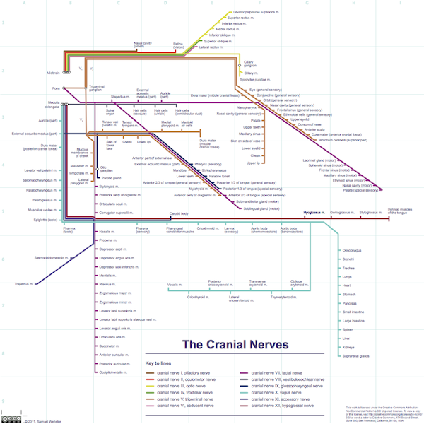Cranial Nerves Map