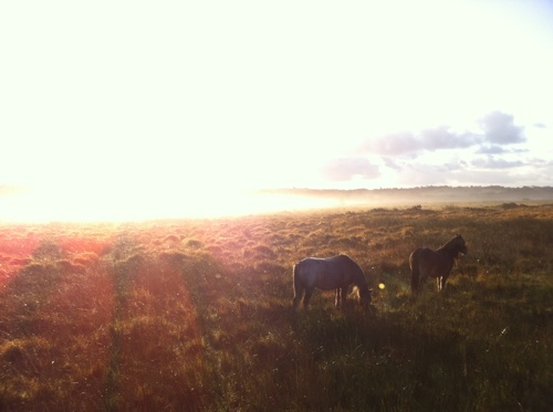 Ponies on Gower