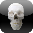 Skull Osteology Icon