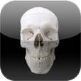 Skull Osteology Icon