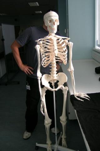 Bones Anatomylab Svw 046-1