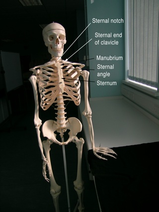 Bones Anatomylab Svw 048