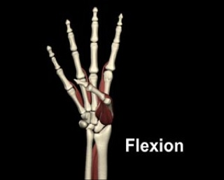 Flexion of the thumb