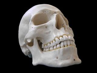 Skull Side-300Px